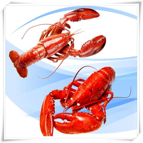 北大西洋龍蝦~克羅采龍蝦海鮮餐廳