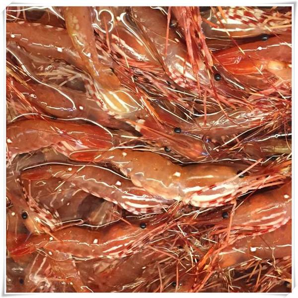 牡丹蝦~克羅采龍蝦海鮮餐廳