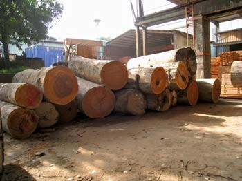 原木木材-建築裝潢角材的原料